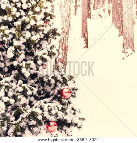 Christmas Tree With Red Balls Under Snow In Pine Forest. Preparation For New Year