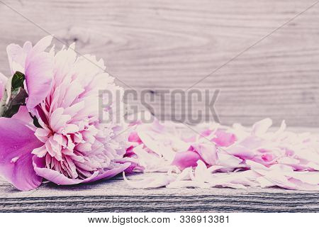 Peony Flowers On Wooden Table. Pink Petals For Background