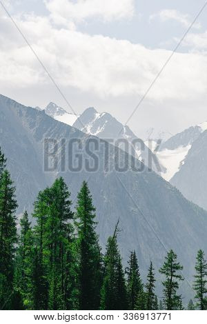 Pine Forest On Background Of Mountain Peaks. Tourism In Mountain Valley