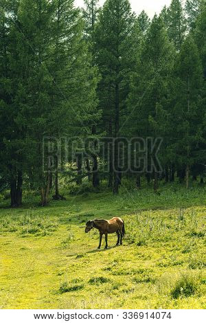 Bay Horse Grazes On Green Meadow On Summer Day