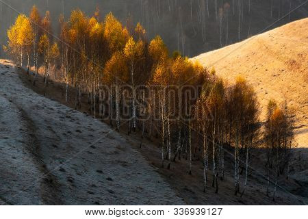 Parcel Of Wild Trees Bordering Two Slopy Sides Of A Hill Hit By The Morning Sun, Western Romanian Ca