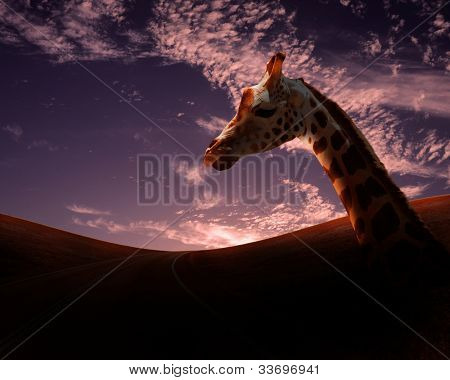 Picture of african animals in savannah at dawn time poster