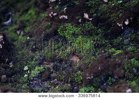 Natural Green Mos Stone Pattern Background And Wallpaper
