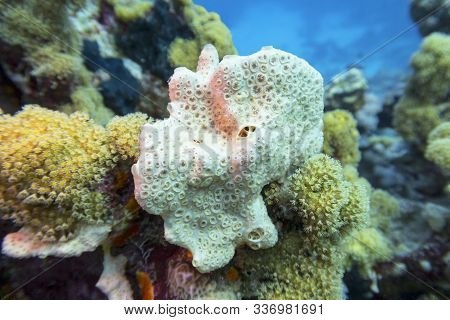 Colorful Coral Reef At The Bottom Of Tropical Sea, White Sea Sponge, Underwater Landscape