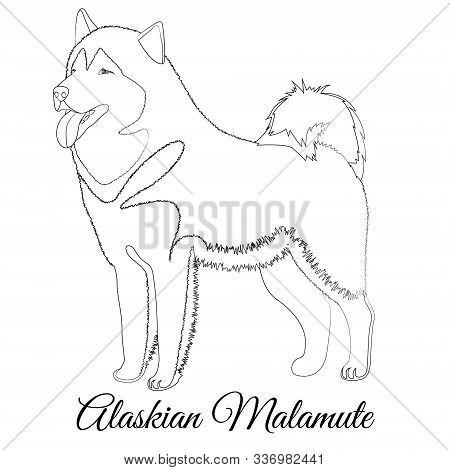 Alaskan Malamute Dog Breed Outline Coloring Vector