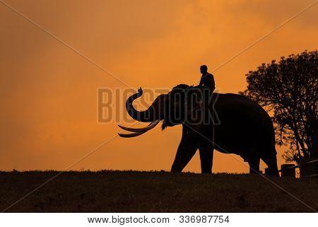 Elephant Silhoutte At Mudumalai In Tamilnadu, India