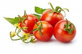 Tomato with leaf for packaging and label. Still life harvest vegetable. Healthy food organic foodstuff. Isolated on white background. poster