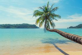 Coconut Palm Tree Over Summer Beach Sea With Clear Water Sea And Wave With Island In Background In P