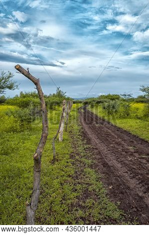Narrow Road In The Field With Clear Sky, A Road In The Field Surrounded By Vegetation With Blue Sky,