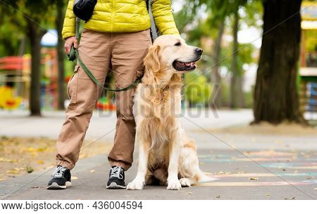 Girl with sitting golden retriever dog on leash at park at autumn day. Owner with labrador doggy pet during walk outdoors
