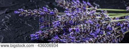 Lavender Bouquet Panorama On A Dark Background. Aromatic Medicinal Herb. Lavandula Flowers In Bloom