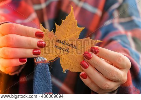 Stylish Red Female Nails. Fall Leaf With Text Autumn Mood In Hands. Modern Beautiful Manicure. Autum