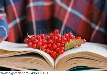 Stylish Red Female Nails. Hands Holding Red Currants And Reading Book. Modern Beautiful Manicure. Au