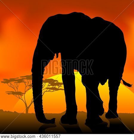 Black Silhouetted Adult Elephant Against An African Sunset - Colored Background Illustration, Vector
