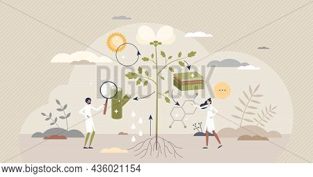 Plant Physiology Research Or Cellular Biology Examination Tiny Person Concept. Nature Process Educat