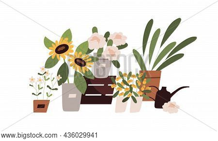 Blooming Flowers, Foliage Plants And Floral Bouquets Composition. Blossomed Flora In Pots, Vases And
