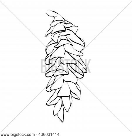 Vector Illustration Of A Fir Cone. Pine Tree Fruit. Christmas Element For Composition. Pine Cone As