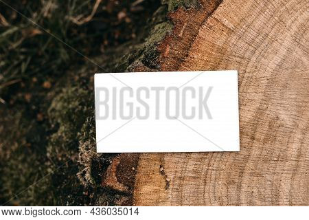 Branding Mock-up. Blank Business Card, Invitation. Cut Wooden Tree Trunk With Moss In Forest. Blurre