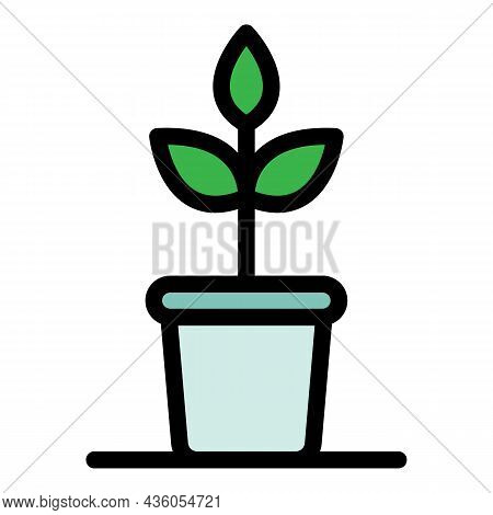 Indoor Plant Icon. Outline Indoor Plant Vector Icon Color Flat Isolated