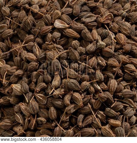 Detailed And Large Close Up Shot Of Anise Seed And Spice.