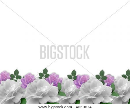 Rose Border Lavender And White
