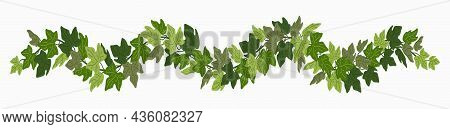 Ivy Festoon, Green Creeper Decorative Border Isolated On White Background. Vector Illustration In Fl