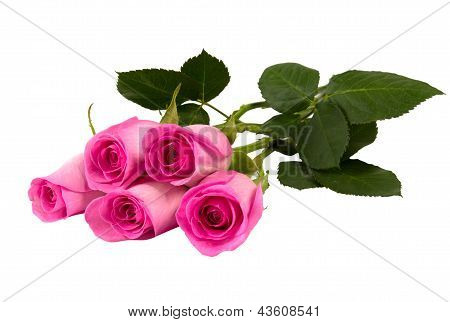 Five Pink Roses