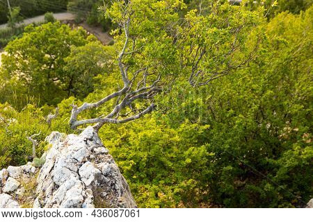 A Lonely Tree Growing On A Rock In The Wild Mountains ..