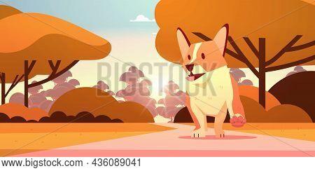 Cute Shiba Inu Dog Walking In Park Furry Human Friend Domestic Pet Concept Cartoon Animal