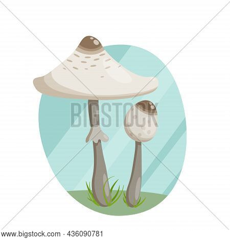 Forest Mushroom Umbrella, A Large Cap With A Thin Leg In The Grass.