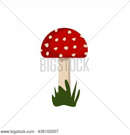 Amanita Mushrooms With Red Caps And White Spots.