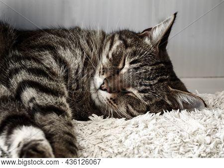 The Tabby Cat Is Sleeping