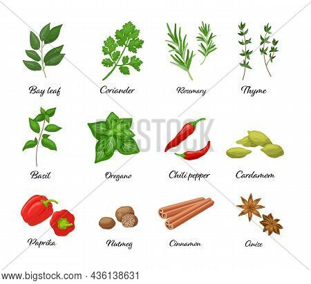 Large Vector Set Of Popular Isolated. Chili Pepper, Paprika, Oregano, Cinnamon, Anise, Basil In Cart