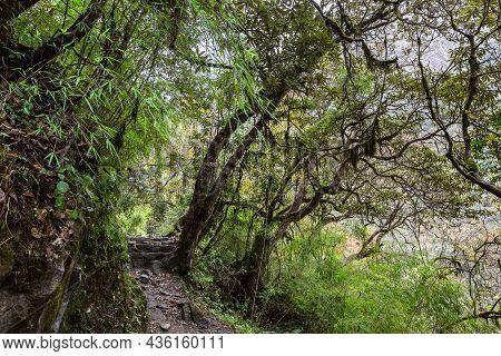 Stone Footpath In Fantastic Green Tropical Jungle. Rainforest In Nepal, Himalaya