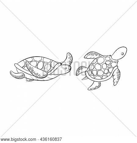 Vector Black Outline Cartoon Doodle Sea Turtles.