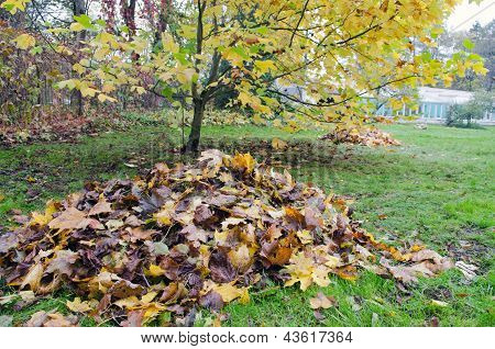 Pile Rake Autumn Leaves Decorative Tree Garden