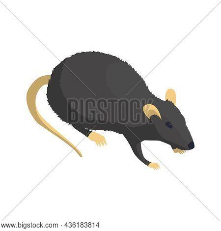 Isometric Icon Of Grey Rat On White Background 3d Vector Illustration