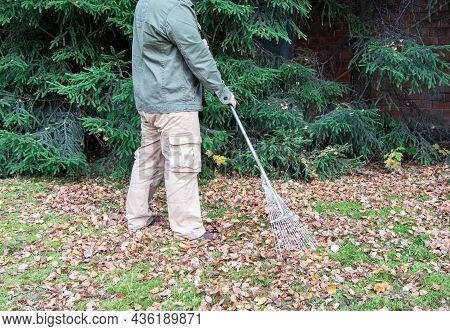 The Man With Rake Removes Fallen Leaves.the Gardener Removes Of Fallen Leaves.fallen Leaves. Autumn