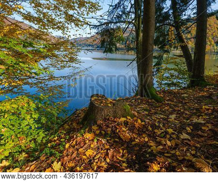 Forest Meadow On Shore Of Picturesque Lake. Vilshany Water Reservoir On The Tereblya River, Transcar