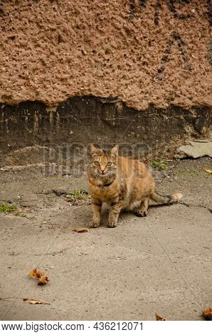 Street Colorful Cat Stands On Street On Background Of House In City. Portrait Of Street Animal In It
