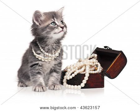 Cute kitten with pearl necklaces isolated on white background poster