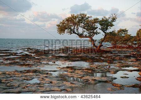 Bäume auf einem Riff-Strand.