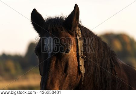 Horse In Autumn Landscape In Early Sunny Morning.