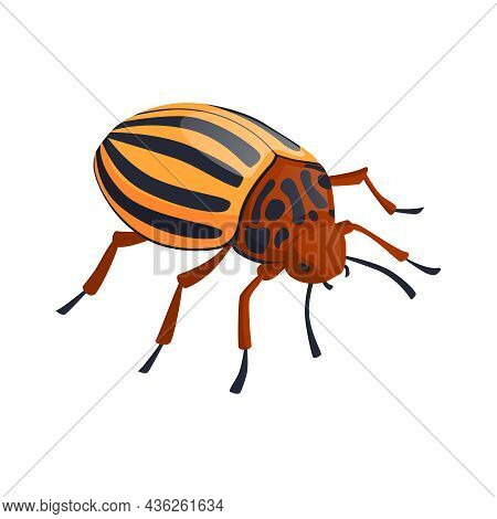 Colorado Potato Beetle On White Background Isometric Vector Illustration