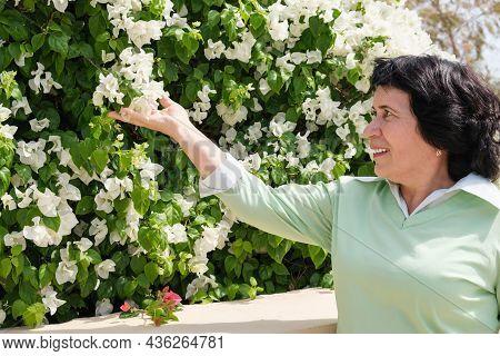 Senior Citizen Brunette Woman Checks A Flowering Shrub In Her Garden. The Landscape Designer Decorat