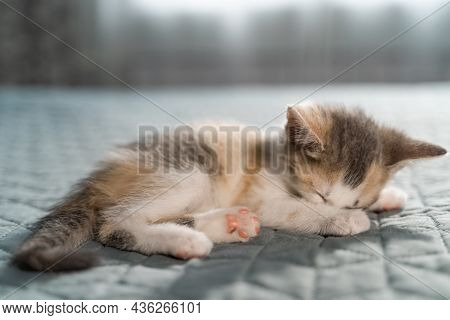 Cute Tabby Kitten Sleeping On Soft Blanket. Cat Rest Napping On Bed. Comfortable Pet Sleeping In Coz