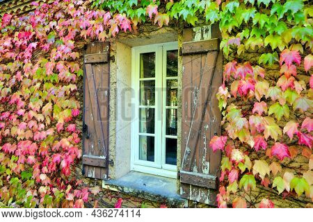 Virginia Creeper Leaves Surrounding French Farmhouse Windows With Shabby Shutters, Undergoing An Aut