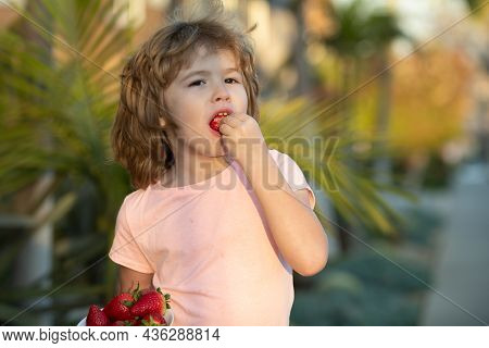 Little Boy Holding A Strawberrie. Cute Baby Kid With Strawberry, Outdoor.