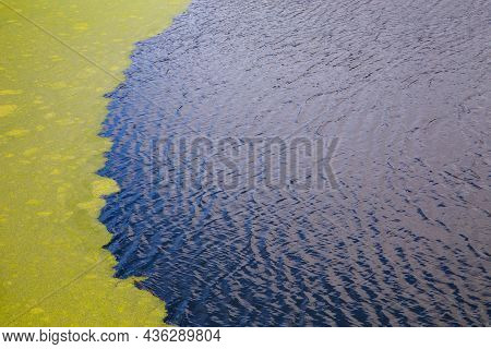Green Algae Floating On Rippled Water Surface Of The Pond With Pronounced Border Between Duckweed An
