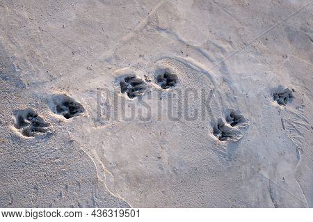 Dog Foot Print On Concrete Floor, Street Dog 's Footprints On Cement, Cement Sidewalk With Dog 's Fo